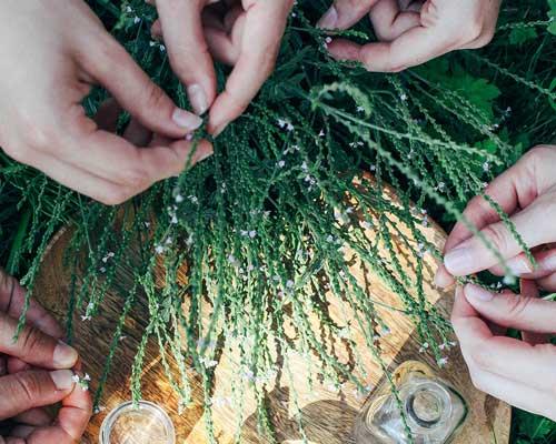 Akademie Modul Heilpflanze Freiraum14 16