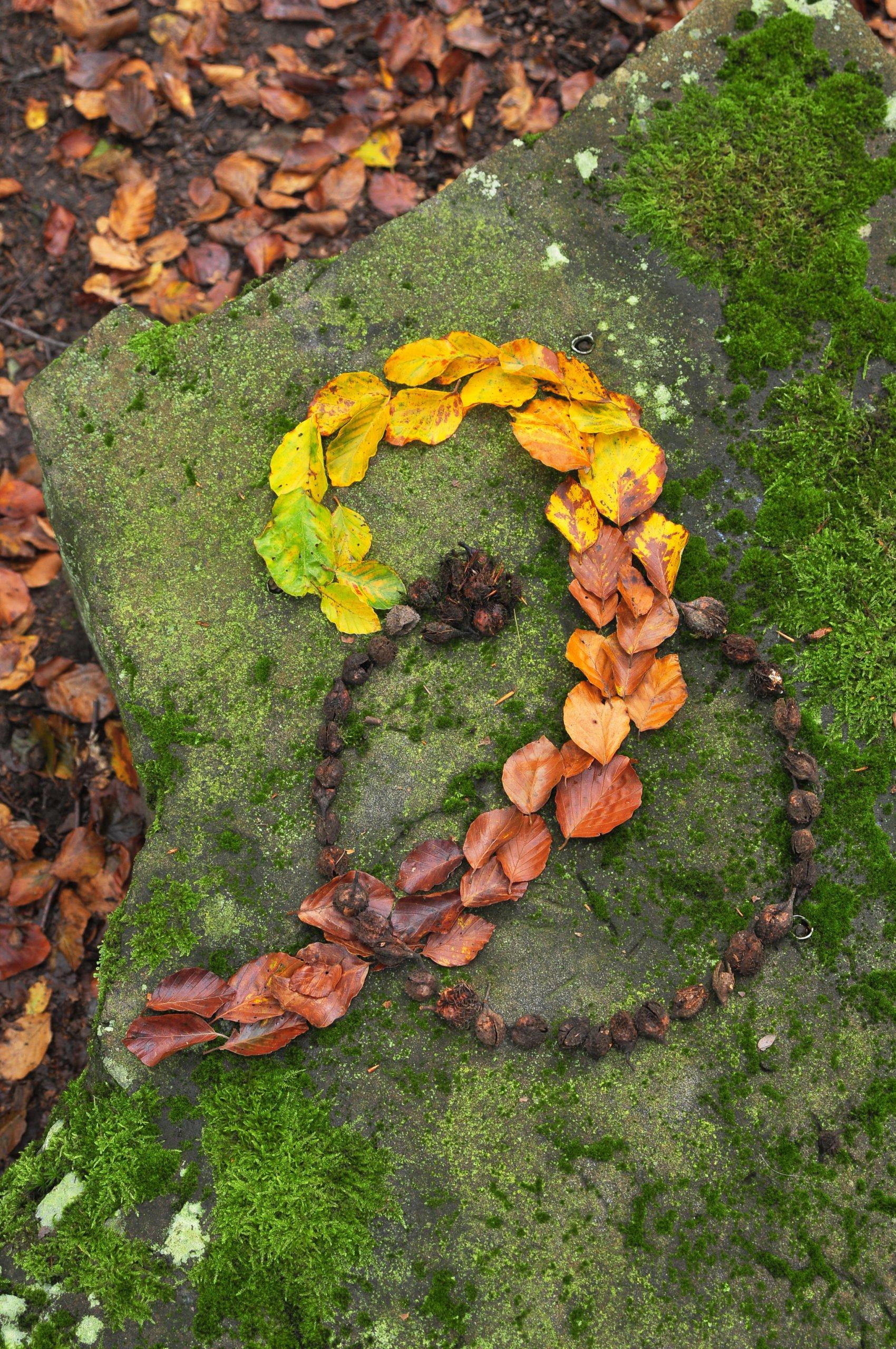 Heilpflanzen Online Training Villa Natura